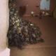 Bee Removal Yorba Linda CA | Behind Chimney Bee Removal
