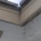 Bee Hive Entrance