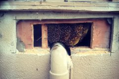 Cypress CA Bee Removal and Repair | Stucco Wall Bee Rescue
