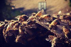 Diamond Bar Bee Removal | Stucco Wall Bee Removal