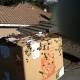 Irvine CA Bee Removal | Wall Bee Rescue