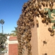 Lake Forest Wall Bee Removal | Bee Swarm Removal | Dead Bee Hive Removal