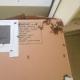 Stucco Wall Bee Removal