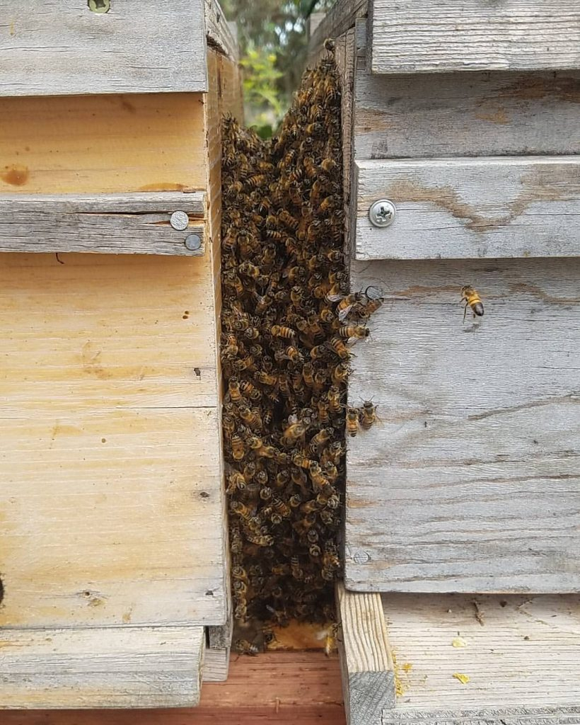 Bee Removal in Gas Lamp Quarter
