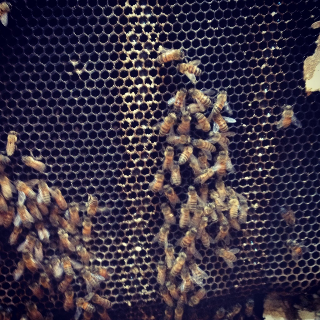 Bee Removal in Pauma Valley