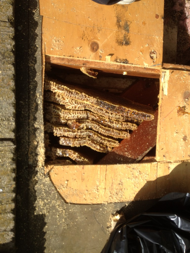 Bee Removal in Mountain Center