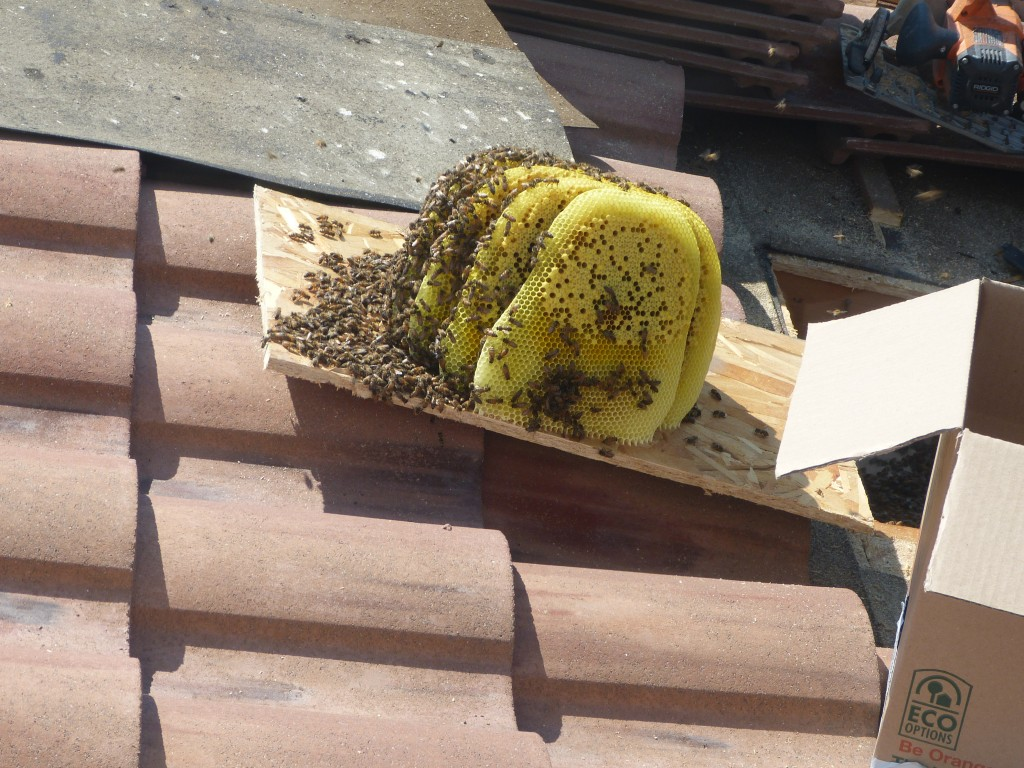 Bee Removal in Indian Wells