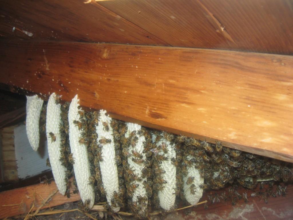 Bee Removal in Menifee