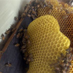 Bee Removal in Desert Hot Springs