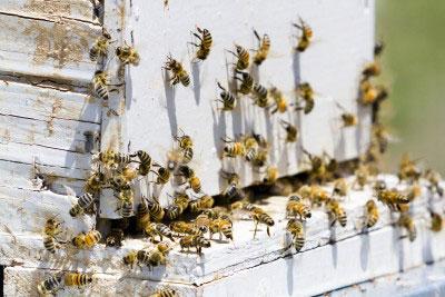 encounter bees