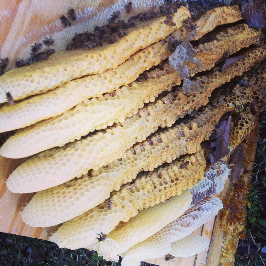 Bee Removal in Lakeside