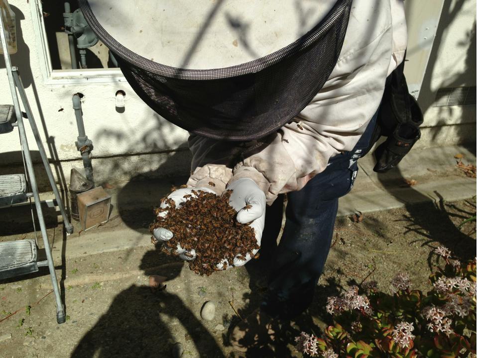 Bee Removal in Tierrasanta