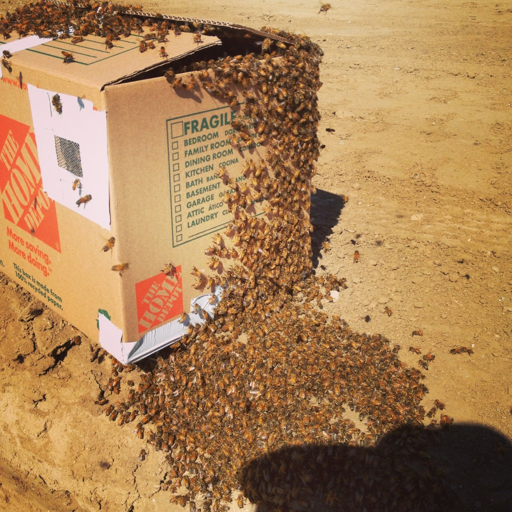 Bee Removal in Beaumont