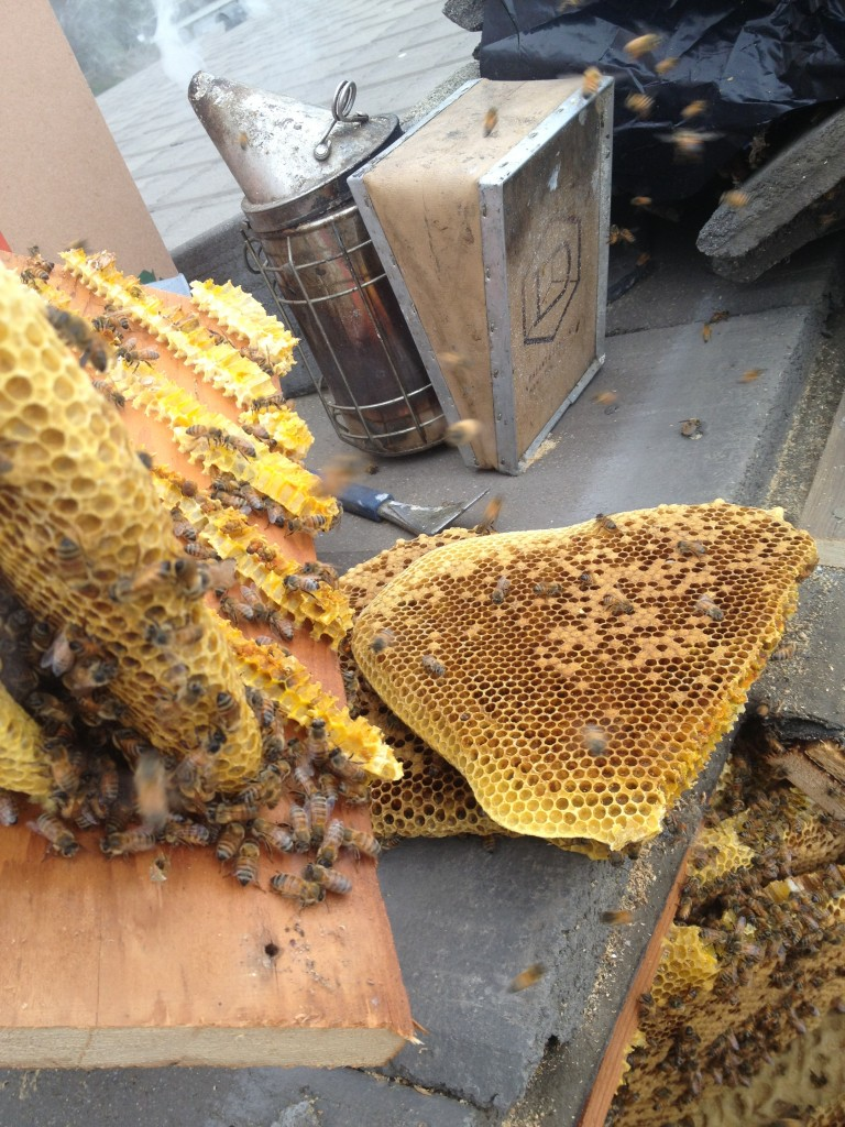 Bee Removal in Banning