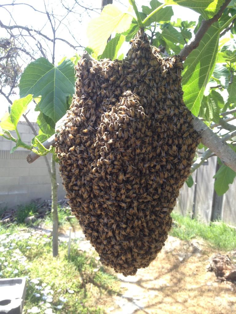 Bee Removal in Villa Park