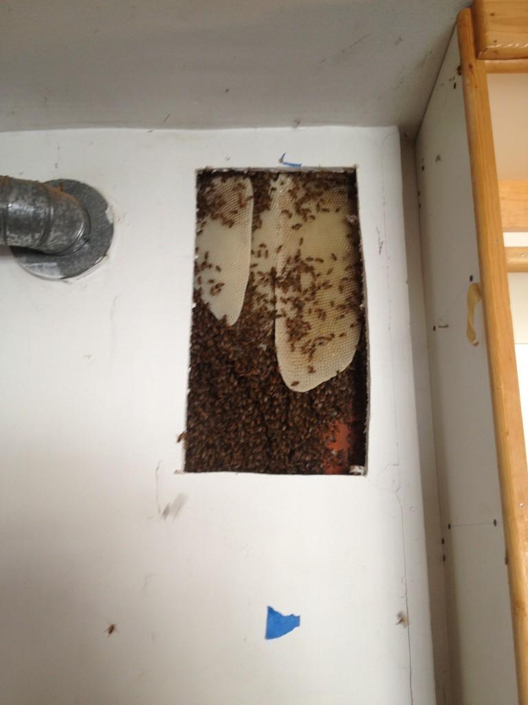 Bee Removal in Yorba Linda
