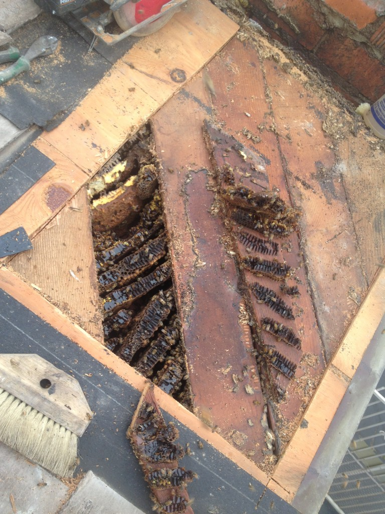 Bee Removal in Tustin