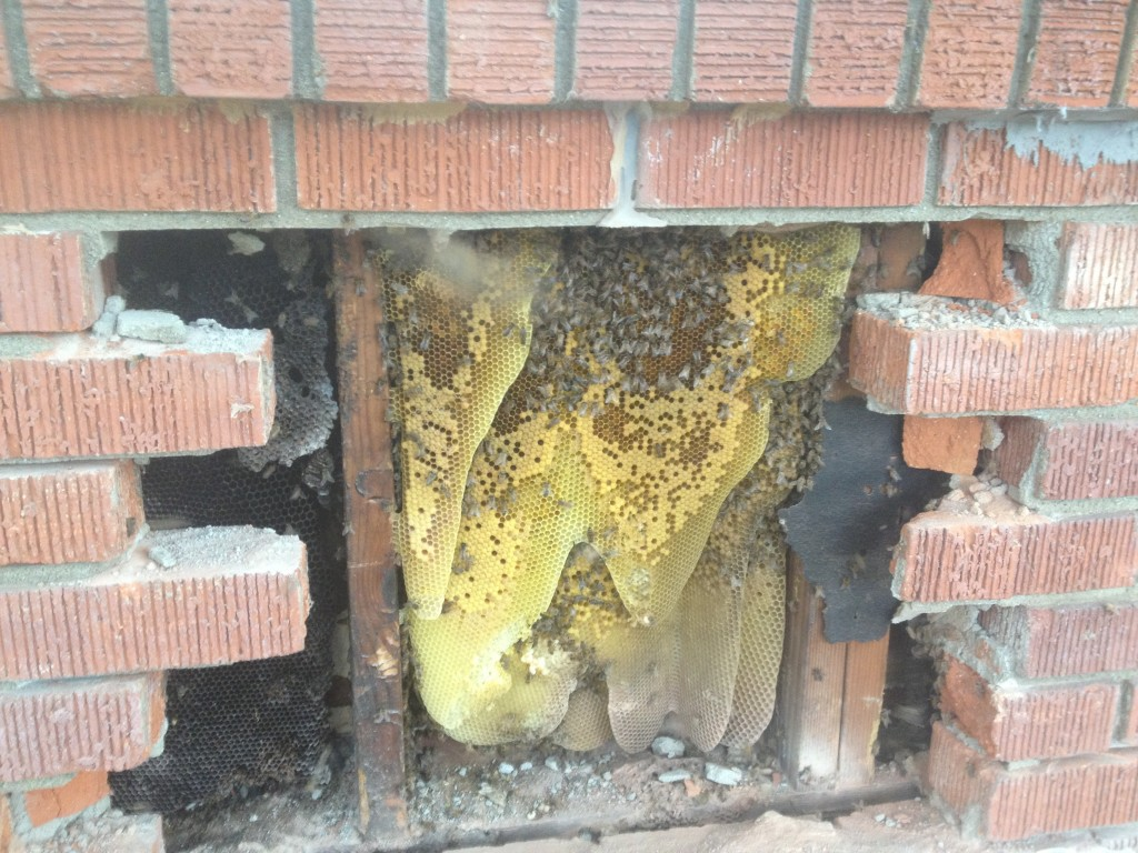 Bee Removal in Stanton