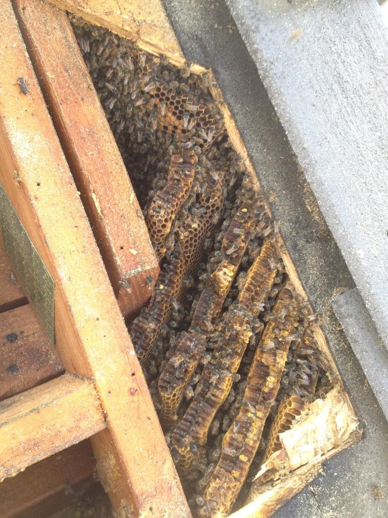 Bee Removal Rancho Santa Margarita