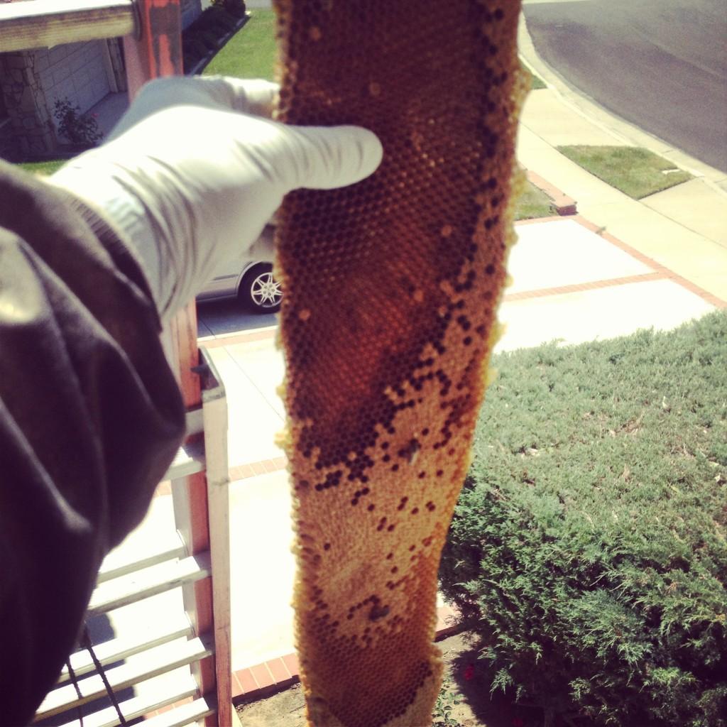 Bee Removal in Los Alamitos