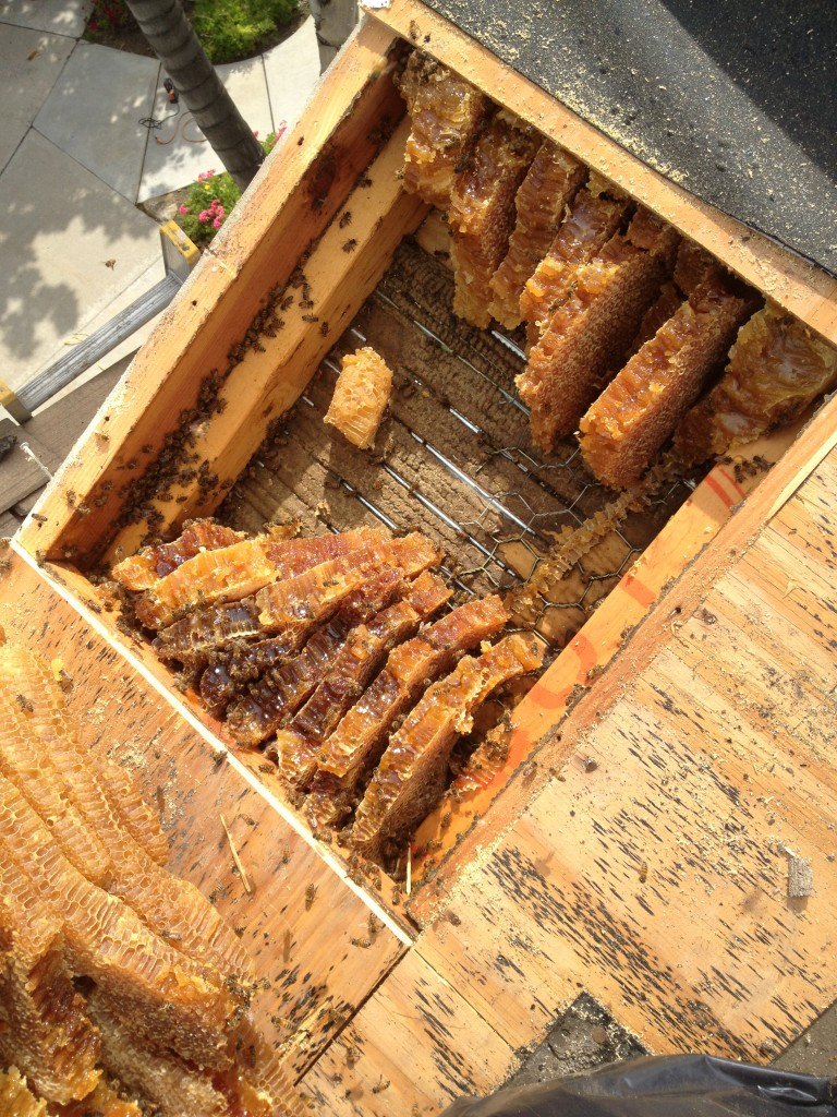 Bee Removal in Huntington Beach