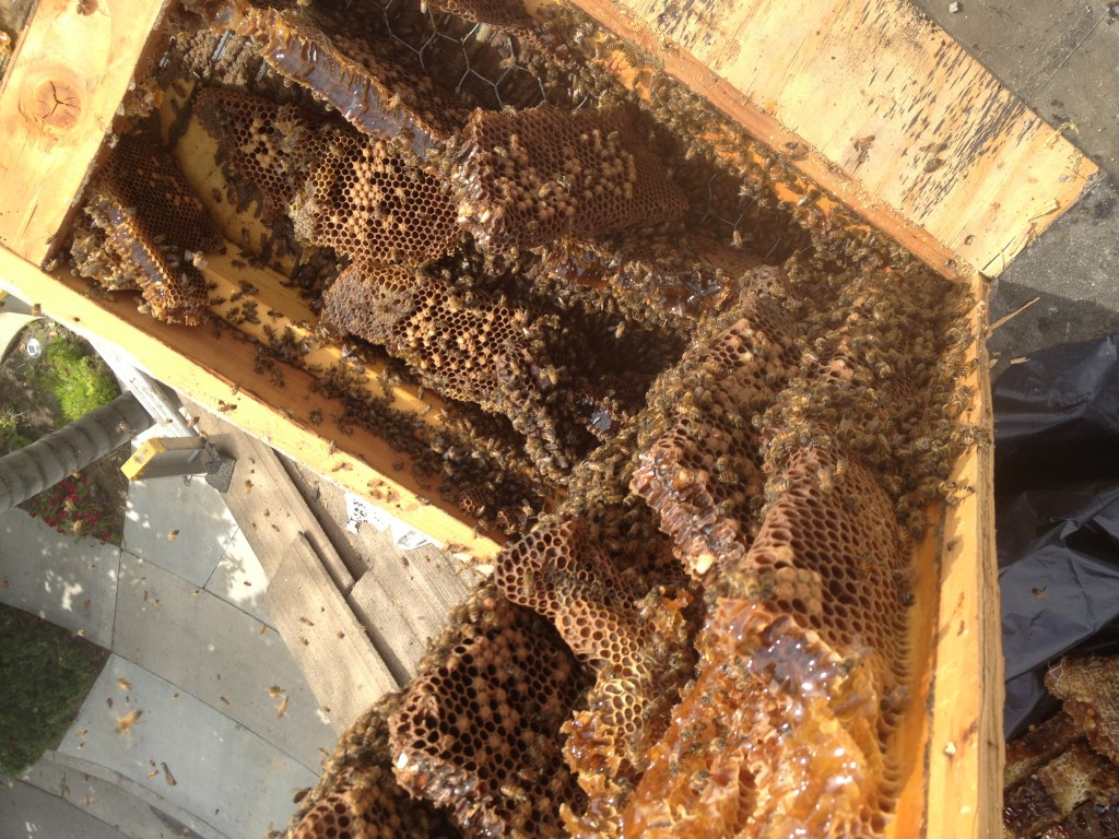Bee Removal in Garden Grove
