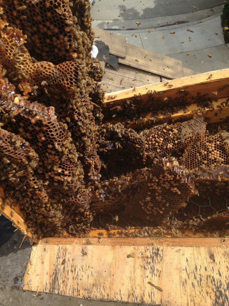 Bee Removal in Laguna Hills