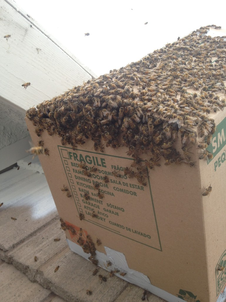 Bee Removal in Fountain Valley