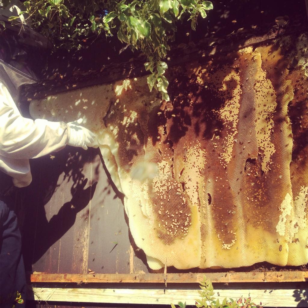 Bee Removal in La Palma