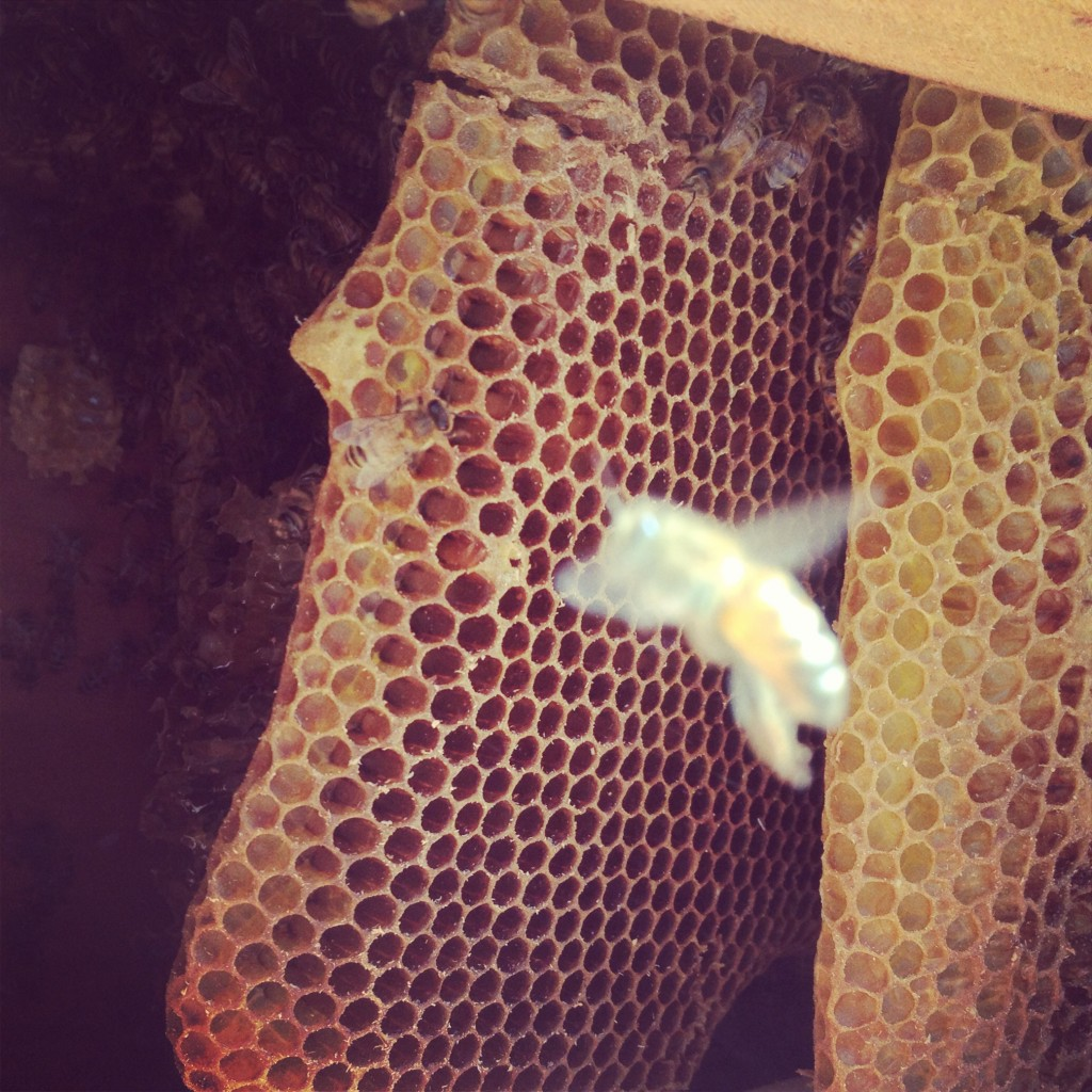 Bee Removal in Laguna Niguel