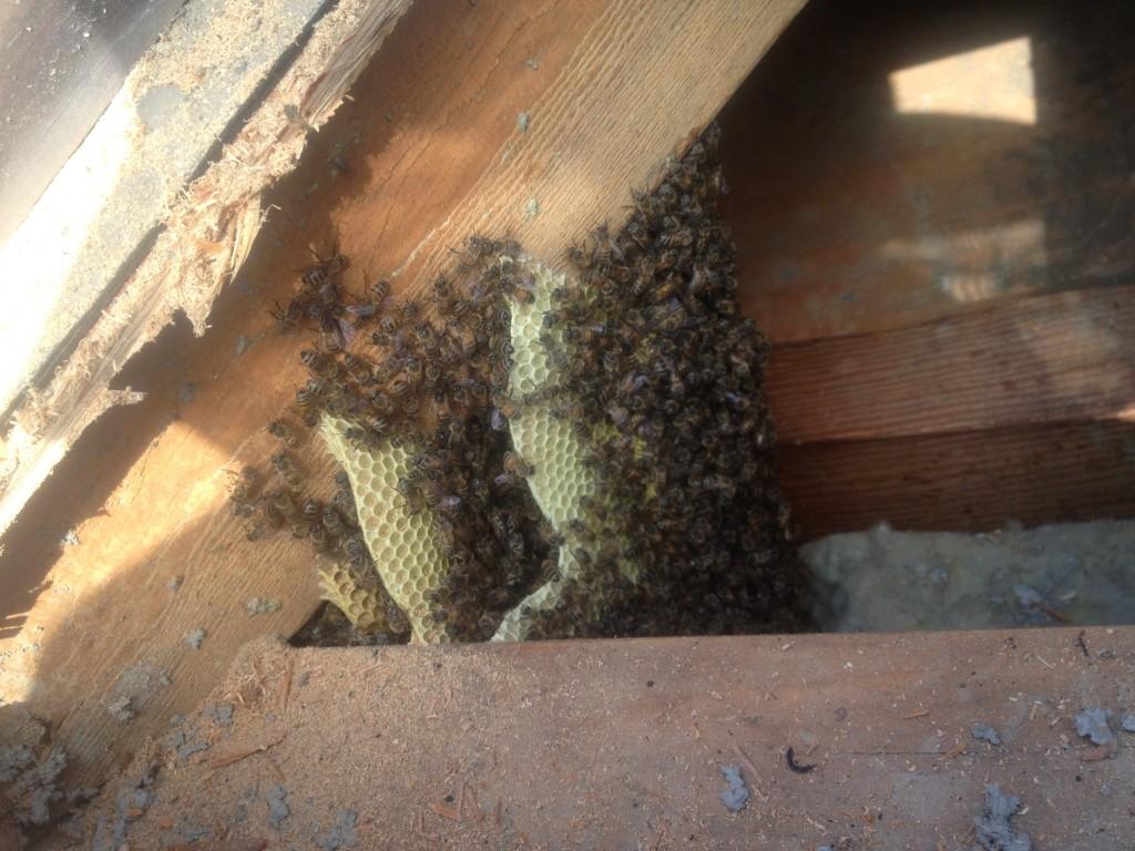 Bee Removal in Coachella