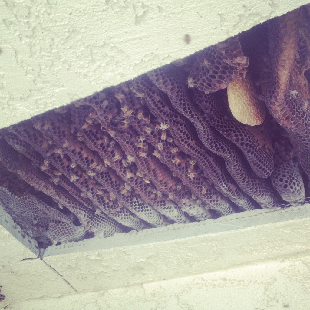 Bee Removal in Cabazon