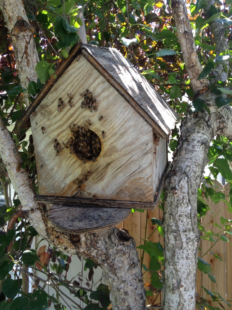 Bee Removal in Winchester