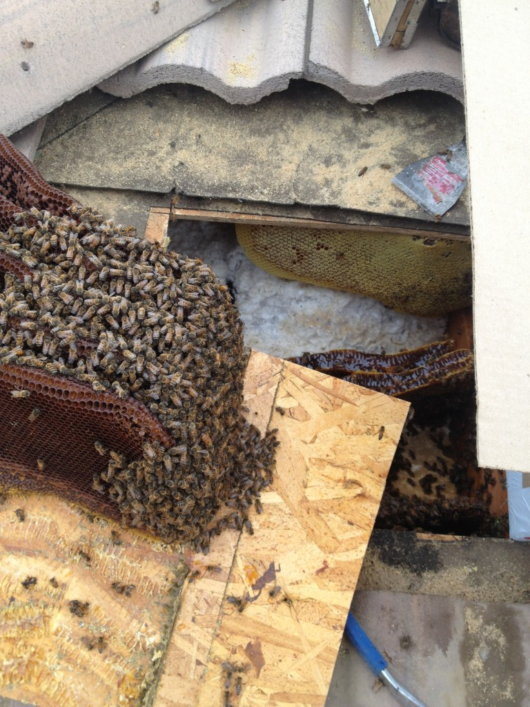 Bee Removal in National City