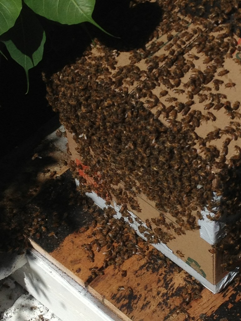 Bee Removal in Jamul