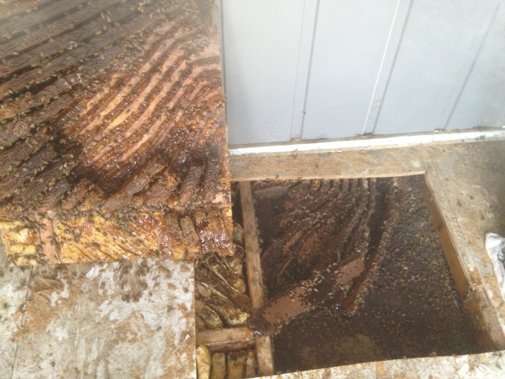 Bee Removal in Fallbrook