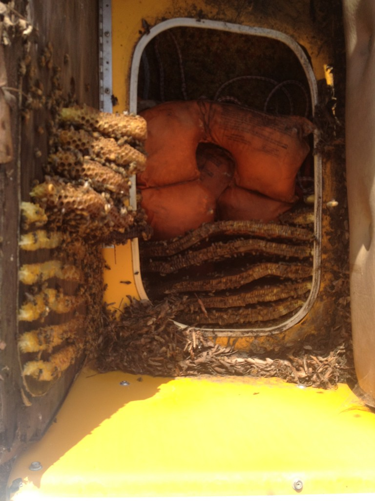 Bee Removal in Thermal