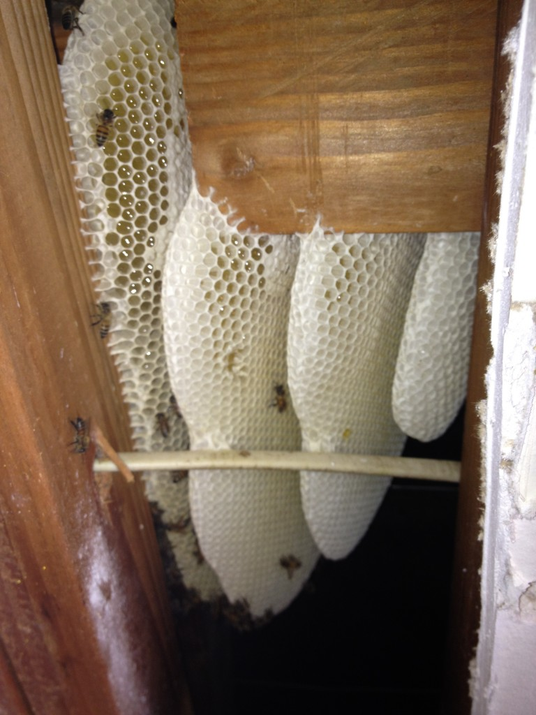 Bee Removal in Quail Valley