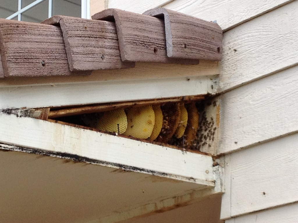 Bee Removal in Perris