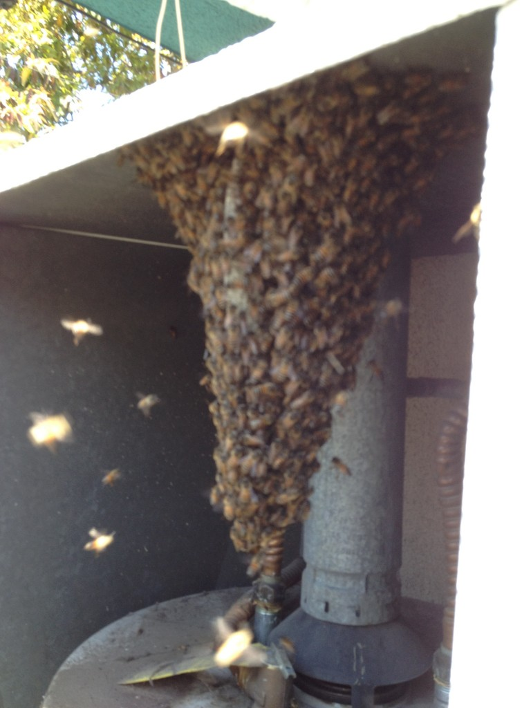 Bee Removal Palm Springs