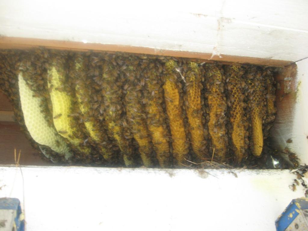 Bee Removal Lake Elsinore