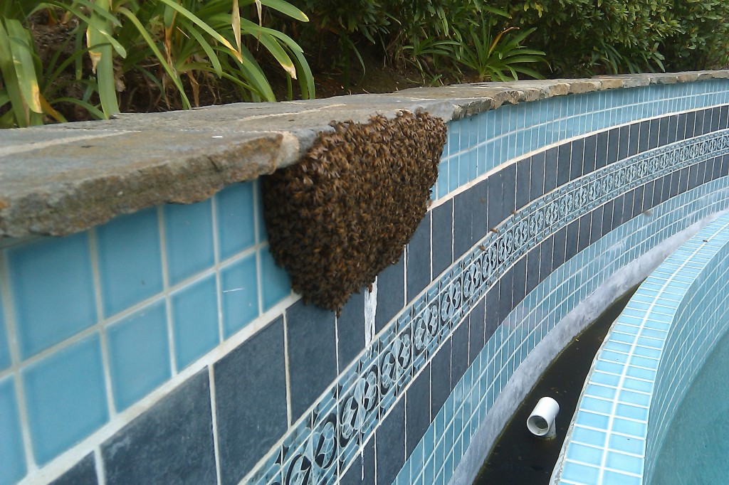 Bee Removal in Moreno Valley