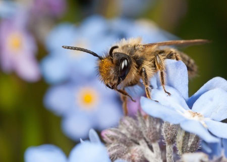 Mining Bees: Are You Seeing Bee Nests Underground?
