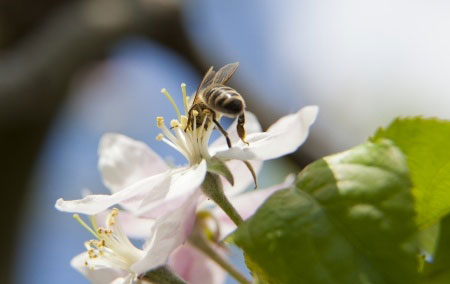 Pollination 101 – Why Bees are So Important