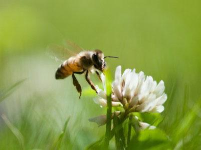 Bee Removal in Desert Center