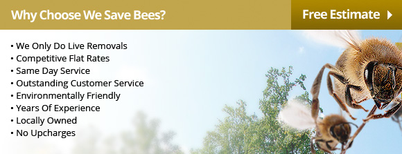 Why Choose We Save Bees