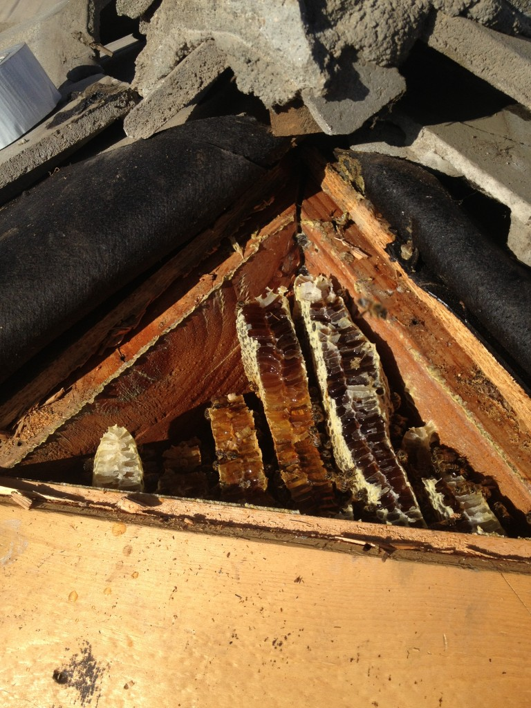 Bee Removal in Imperial Beach
